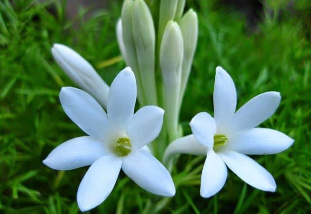 Các loại hoa dùng để thờ cúng phổ biến tại Việt Nam hình ảnh 2