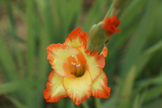 Các loại hoa dùng để thờ cúng phổ biến tại Việt Nam hình ảnh 3