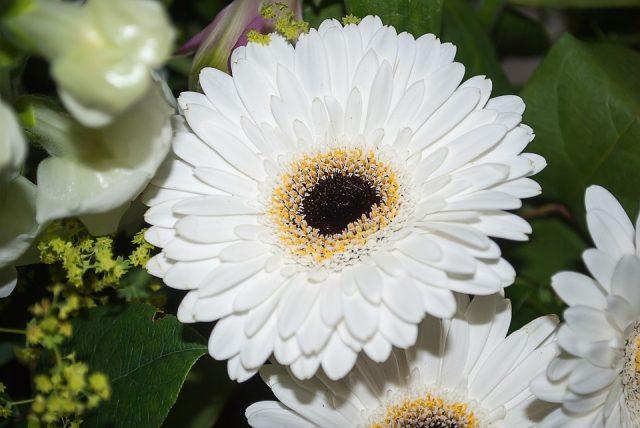 Những loài hoa mang ý nghĩa buồn phù hợp cho đám tang hình ảnh 2