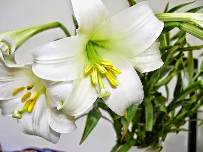 Những loài hoa mang ý nghĩa buồn phù hợp cho đám tang hình ảnh 4