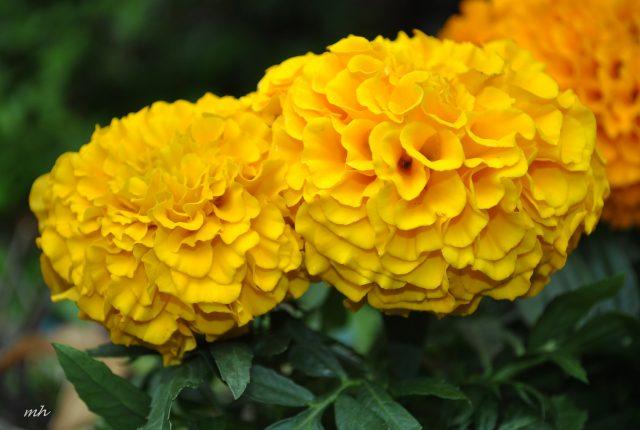 Các loại hoa dùng để thờ cúng phổ biến tại Việt Nam hình ảnh 1
