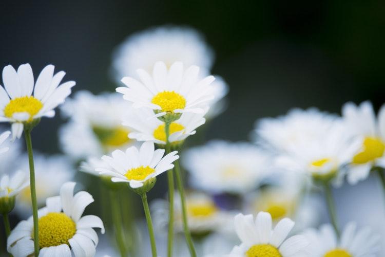 Những loài hoa mang ý nghĩa buồn trong cuộc sống hình ảnh 1