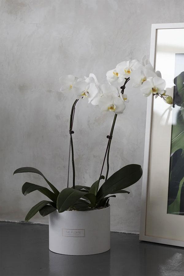các loài hoa tượng trưng cho đám tang - hoa lan
